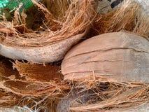 Buccia della noce di cocco Fotografie Stock