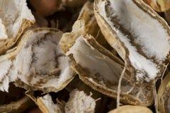 Buccia delle arachidi americane immagini stock libere da diritti