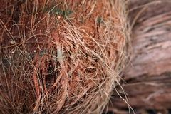 Buccia II della noce di cocco Immagini Stock Libere da Diritti