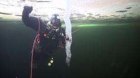 Buceador cerca del carámbano en underwter de la parte inferior doble en hielo del mar blanco metrajes