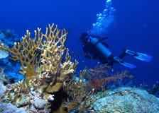 Buceador con las burbujas y los corales en Habili Ali, los filones de St John, con referencia a fotografía de archivo