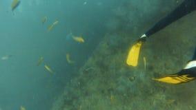 Buceador con los grupos de pescados amarillos almacen de metraje de vídeo