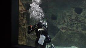 Buceador con los pescados en un acuario almacen de metraje de vídeo