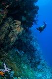 Buceador, coral negro plumoso en Banda, foto subacuática de Indonesia foto de archivo libre de regalías