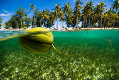 Buceador cristalino flotante del buceo con escafandra de Indonesia del kapoposang del agua del coco Fotos de archivo