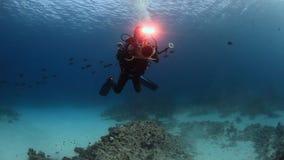 Buceador del cameraman que nada el submarino profundo en el Mar Rojo metrajes