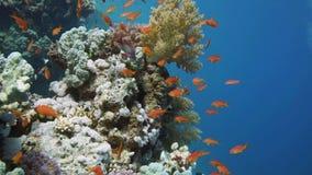 Buceador, pescados tropicales y Coral Reef almacen de metraje de vídeo