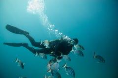 Buceador rodeado por un grupo de pescados foto de archivo