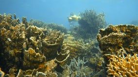 Buceador subacuático con una vespa del mar metrajes