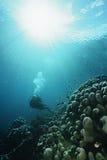Buceador Underwater Fotografía de archivo