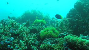 Buceadores Point of View que nada sobre Coral Reef Fotos de archivo libres de regalías