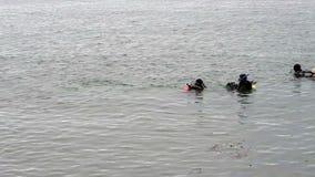 Buceadores que nadan en la bahía California de Monterey almacen de video