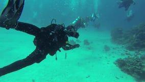 Buceadores que nadan a lo largo de la parte inferior almacen de metraje de vídeo