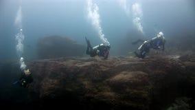 Buceadores subacuáticos en las Islas Galápagos metrajes
