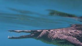 Buceando un cocodrilo americano en Cuba almacen de metraje de vídeo
