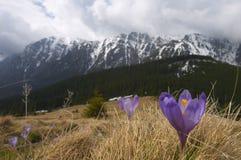 Bucegi山风景全景在春天 免版税库存照片