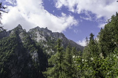 Bucegi山风景在夏天 库存图片