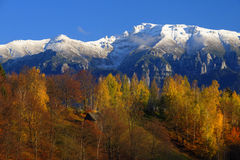 Bucegi mountains in Romania. Scenic view of snow capped Bucegi mountains with autumn forest in foreground, Romania royalty free stock images