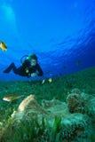 Buceo con escafandra Foto de archivo libre de regalías
