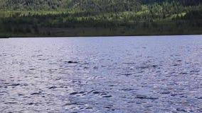 Buceo con escafandra en un lago de la montaña, técnicas practicantes para los salvadores de la emergencia inmersión en agua fría almacen de video