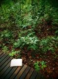 Buch auf Regenwaldspur Stockfoto