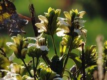 Buch de flores selvagens foto de stock royalty free
