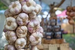 Buch of Garlic on the market royalty free stock images