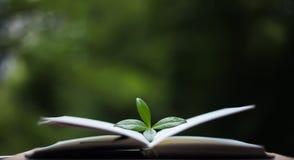 Buch mit Blättern auf Naturhintergrund Lizenzfreies Stockbild
