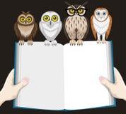 Buch und Eulen Stockfoto