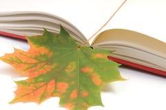 Buch wih Herbstblätter Stockbild