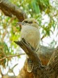 Buchan foudroie la réservation, Victoria, Australie photo stock