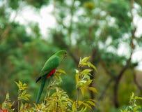 Buchan holt Reserve, Victoria, Australië uit stock afbeeldingen