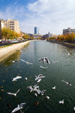 Bucharest - Autumn view stock photography
