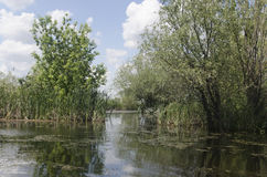 Bucharest delta arkivfoto