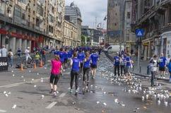 Runners during marathon Royalty Free Stock Photos