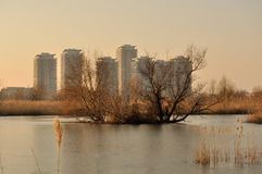 Bucharest natural park. Bucharest natural delta in center of the city Royalty Free Stock Photo