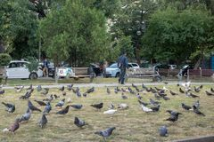 Pigeons in a park. stock image