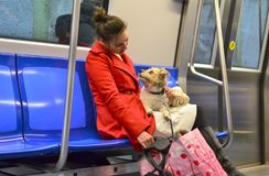 Young woman with small dog. Bucharest, Romania - December 03, 2015: A young lady in red coat sitting in subway train and talking to her small dog which looks royalty free stock photography