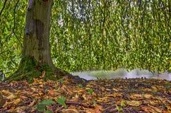 Buche-Baum im Herbst Lizenzfreie Stockbilder