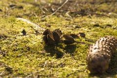 Buchecker auf dem Gras lizenzfreie stockfotografie