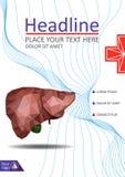 Bucheinbandschablone mit der realistischen menschlichen Leber mit dem Gallenweg Stockbild