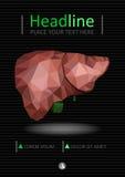 Bucheinbandschablone mit der realistischen menschlichen Leber mit dem Gallenweg Stockbilder