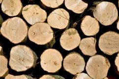 Buchekabel wird in Brennholz geschnitten Lizenzfreies Stockfoto