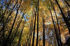 Buchen im Herbst Lizenzfreie Stockfotos