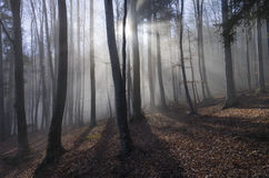 Buchenwald mit Sonnenlichtstrahlen Lizenzfreies Stockfoto