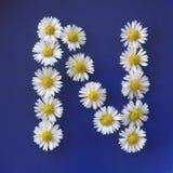 Buchstabe N von den weißen Blumen, Gänseblümchen, Bellis perennis, Nahaufnahme, auf blauem Hintergrund Stockfotografie