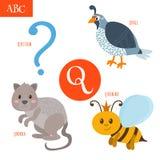 Buchstabe Q Karikaturalphabet für Kinder Wachteln, Frage, Königin Lizenzfreie Stockfotografie