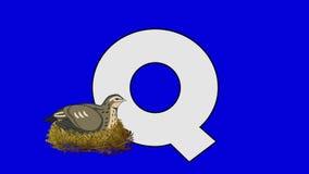 Buchstabe Q und Wachteln (Vordergrund) stock abbildung