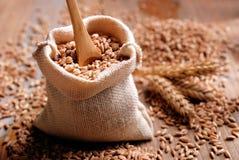 Buchstabierte Samen in der Tasche Stockbild