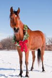 Bucht Arabiabn-Pferd im Schnee mit einem Weihnachtskranz Lizenzfreies Stockfoto